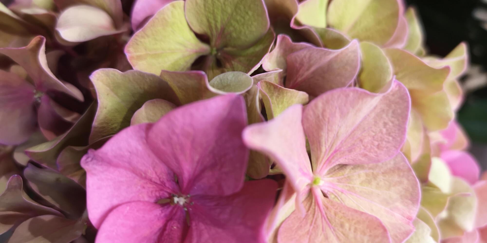 Blumenstrauß von Blütenreich Herms in Recklinghausen